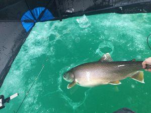 thin-ice-lake-trout-2015