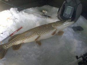 Pike 14.66 lb