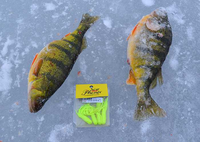 lake_simcoe_jumbo_perch-mar_16_2013_5.jpg