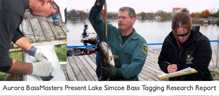 Aurora Bassmasters Present Lake Simcoe Bass Tagging Research Report